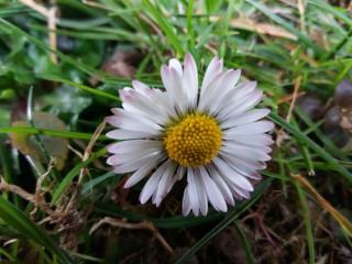 V sebi prebudi fotografa – pomladni fotografski natečaj