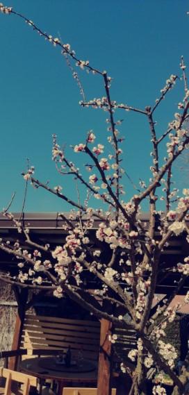 pomlad_ll